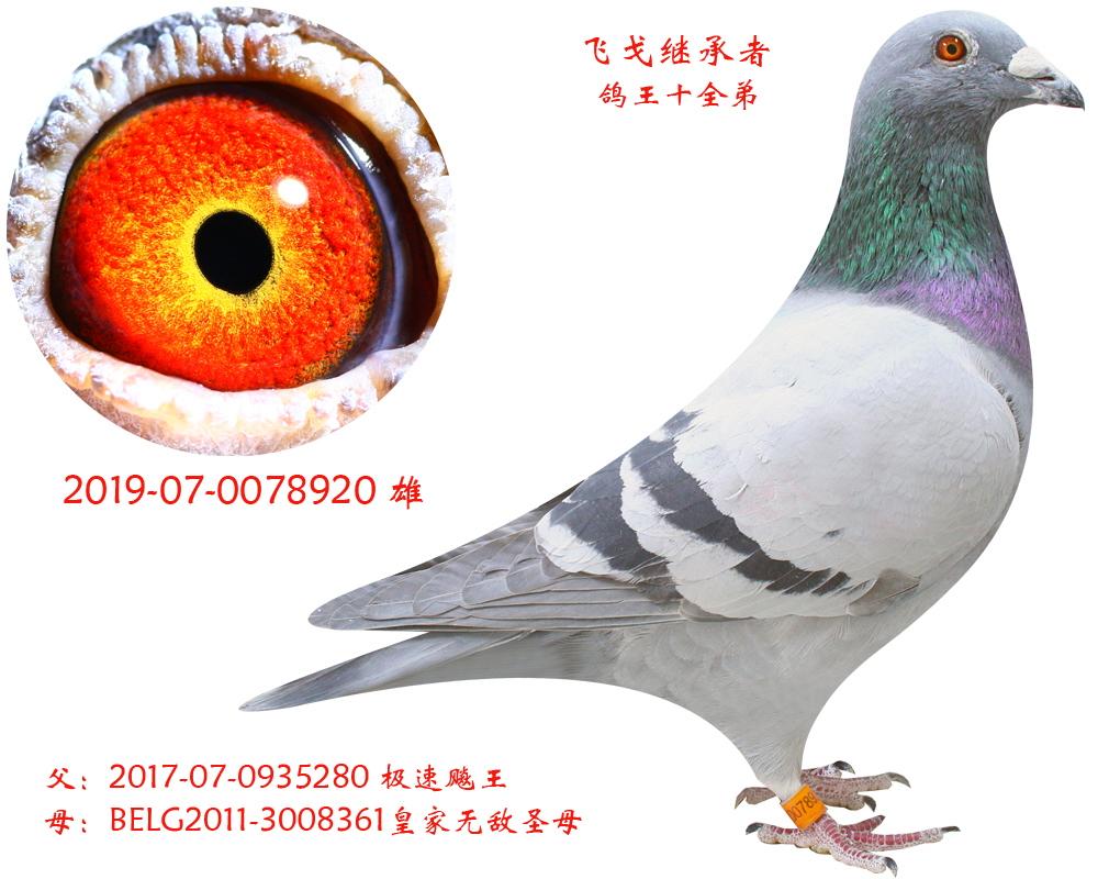 【克里克吉诺飞戈】-【飞戈继承者】