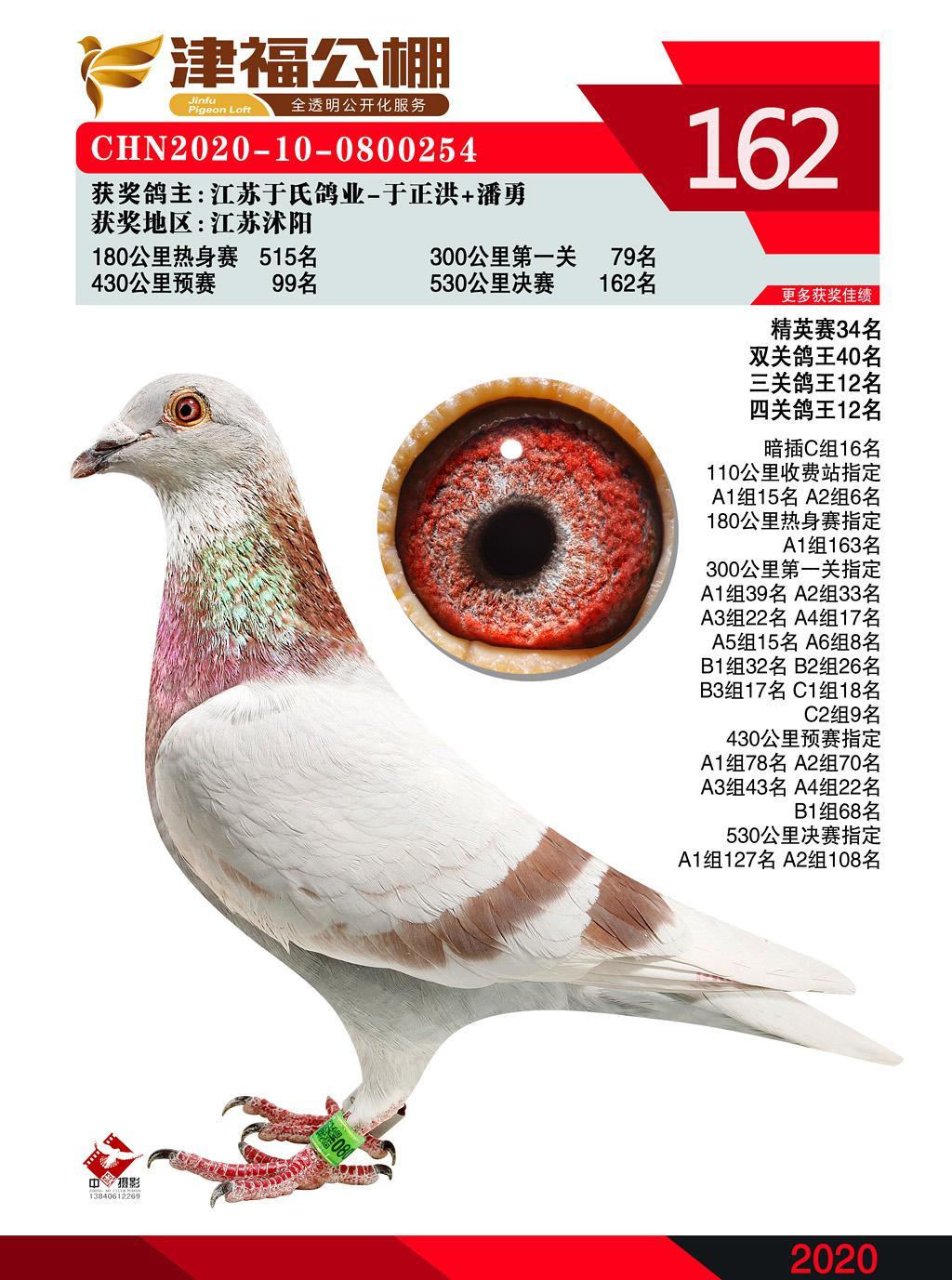 2020津福公棚鸽王12位