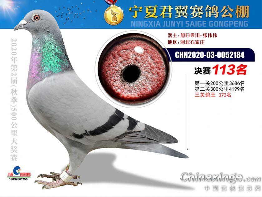 宁夏君翼公棚决赛113名