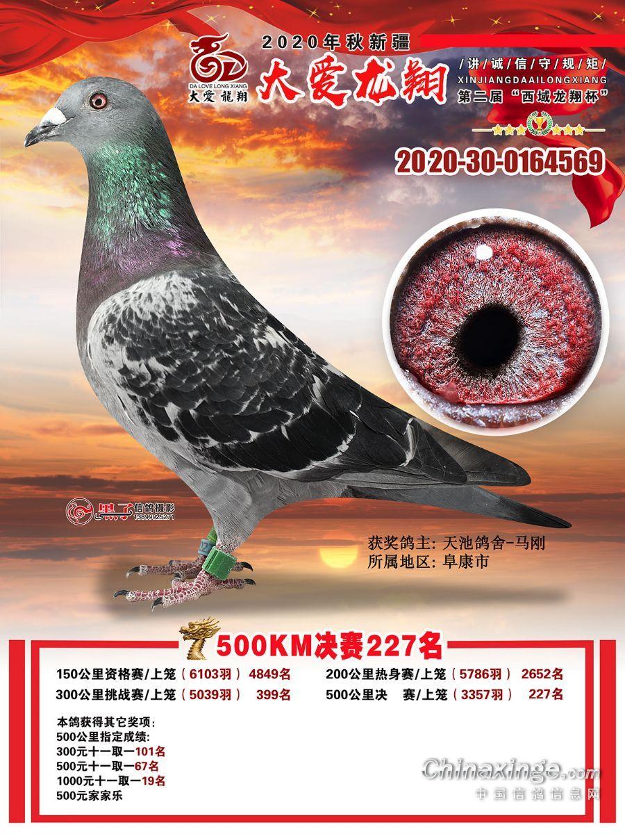 沙漠飞鹰569