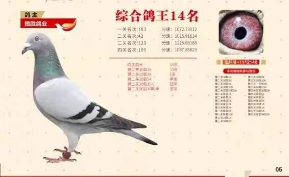 江苏弘腾国际鸽王14名