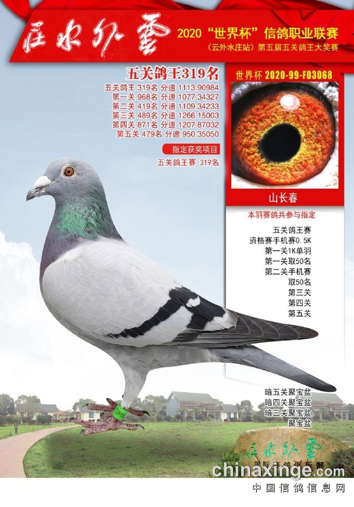 江苏云外水庄五关鸽王综合319名