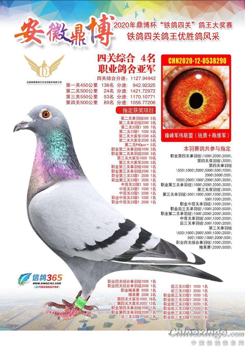 """2020年""""鼎博杯""""铁鸽四关鸽王院内亚军"""