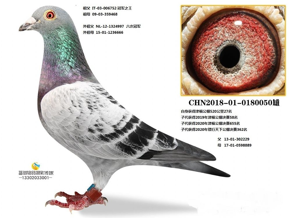 CHN2018-01-0180050雄