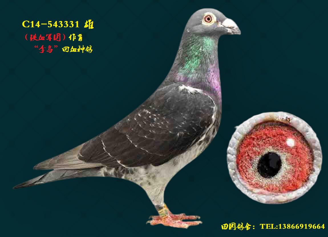 李鸟331