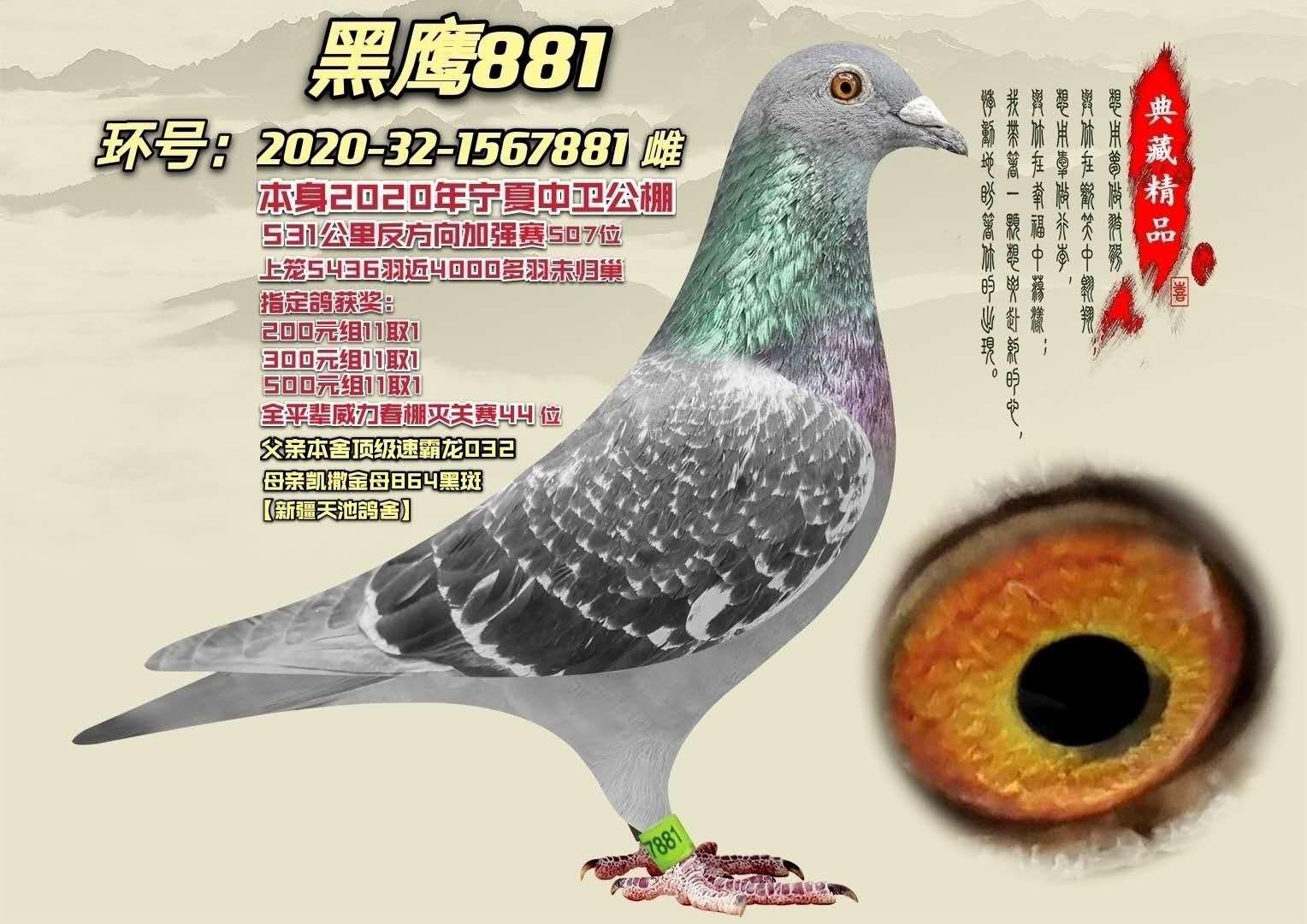 黑鹰881