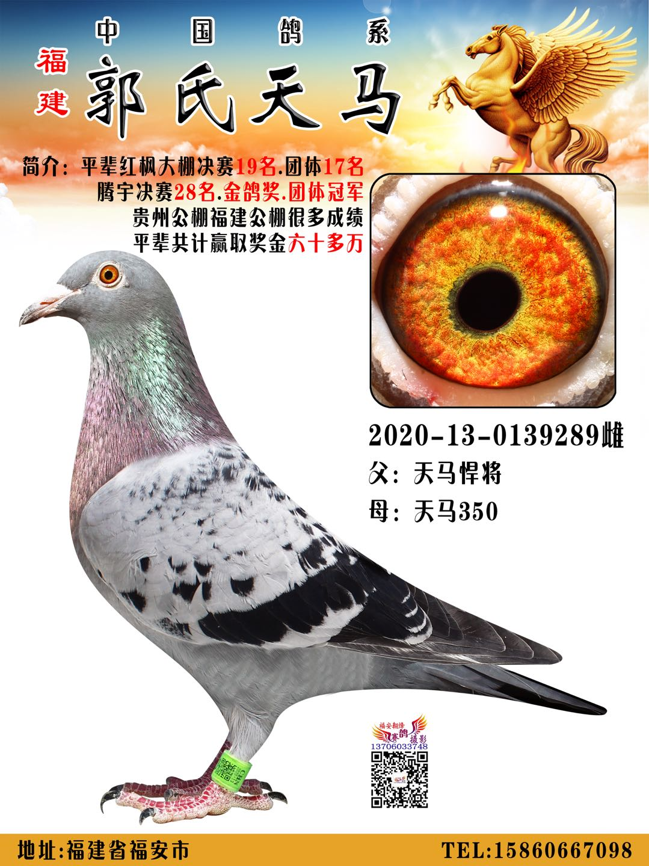 郭氏天马289