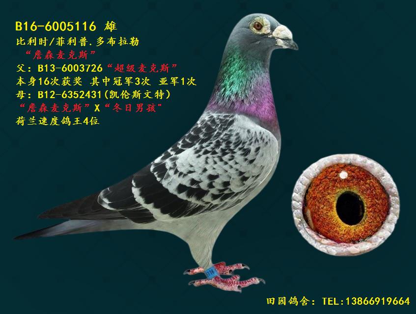 詹森116