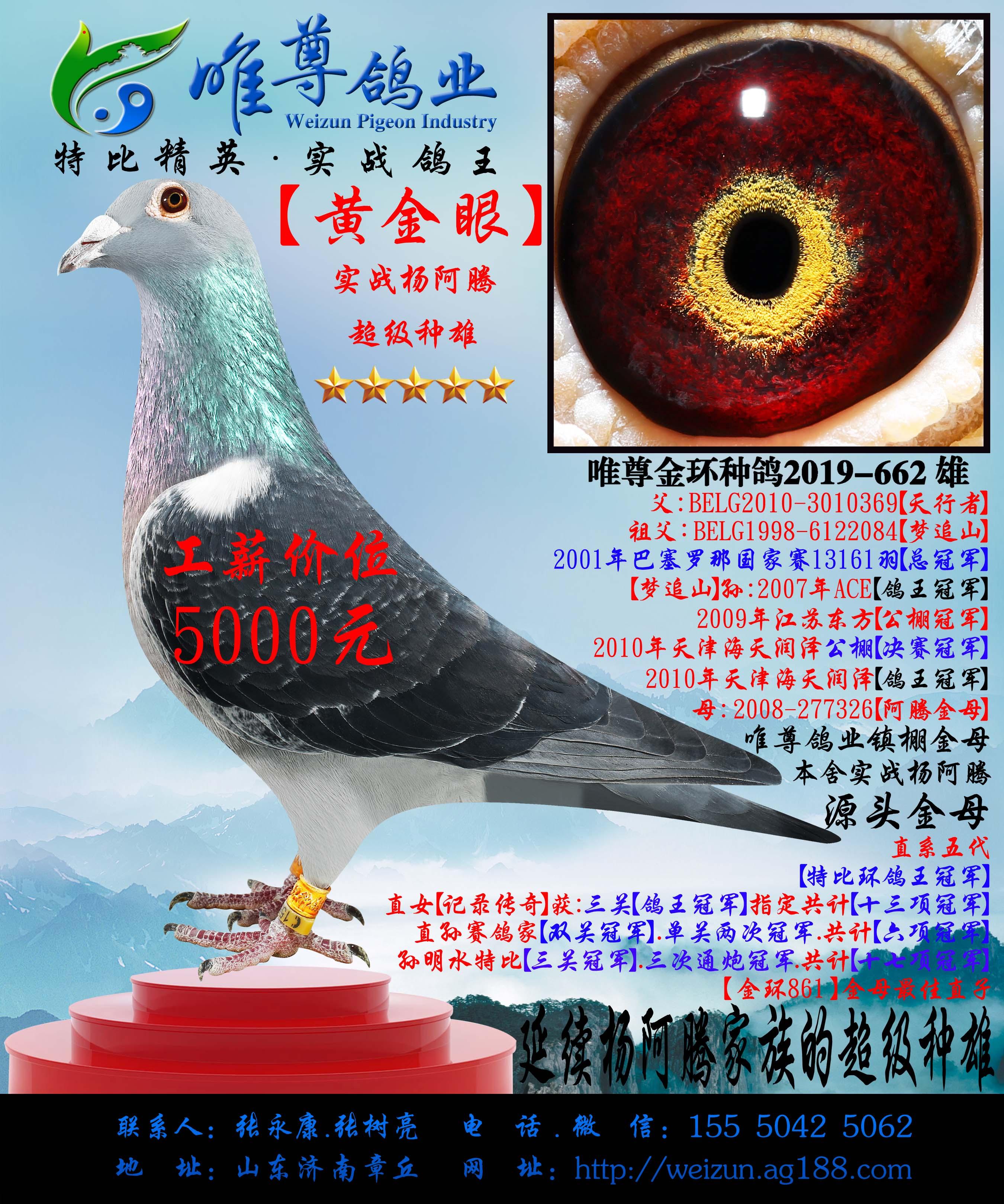 【黄金眼】杨阿腾实战系列