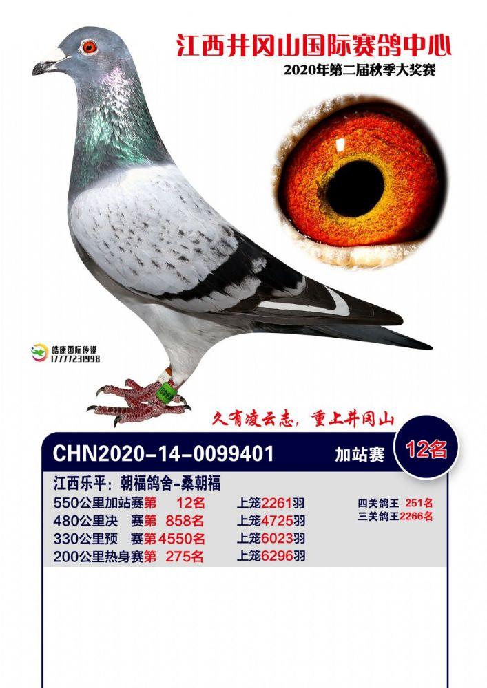 井冈山鸽王