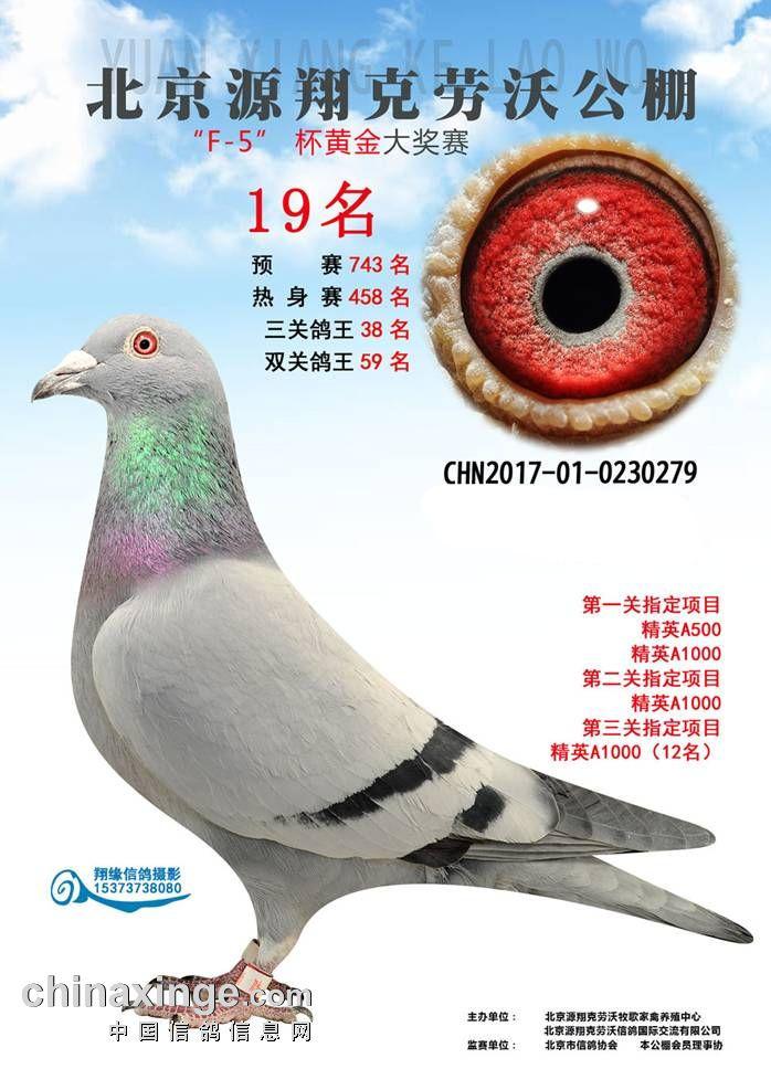 北京源翔克劳沃公棚19名