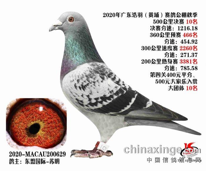 """""""2020黄埔公棚十名"""""""