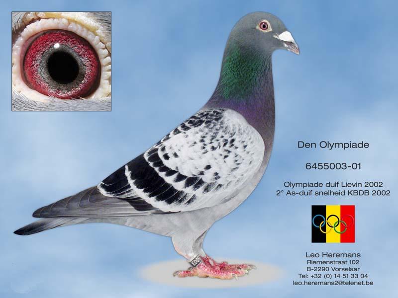 利奥・贺尔曼斯世界最快鸽系奥林匹克03