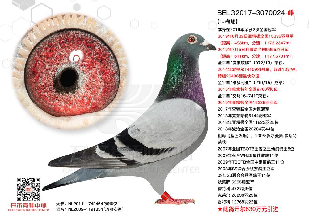 【卡梅隆】亚精顿全国15235羽冠军