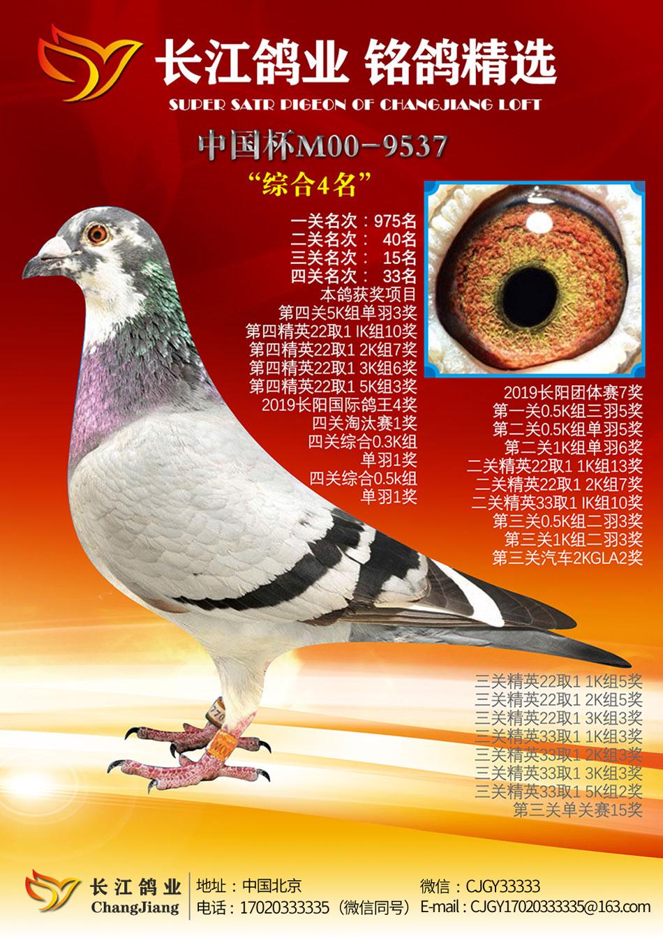 2019年北京长阳国际鸽王综合4名