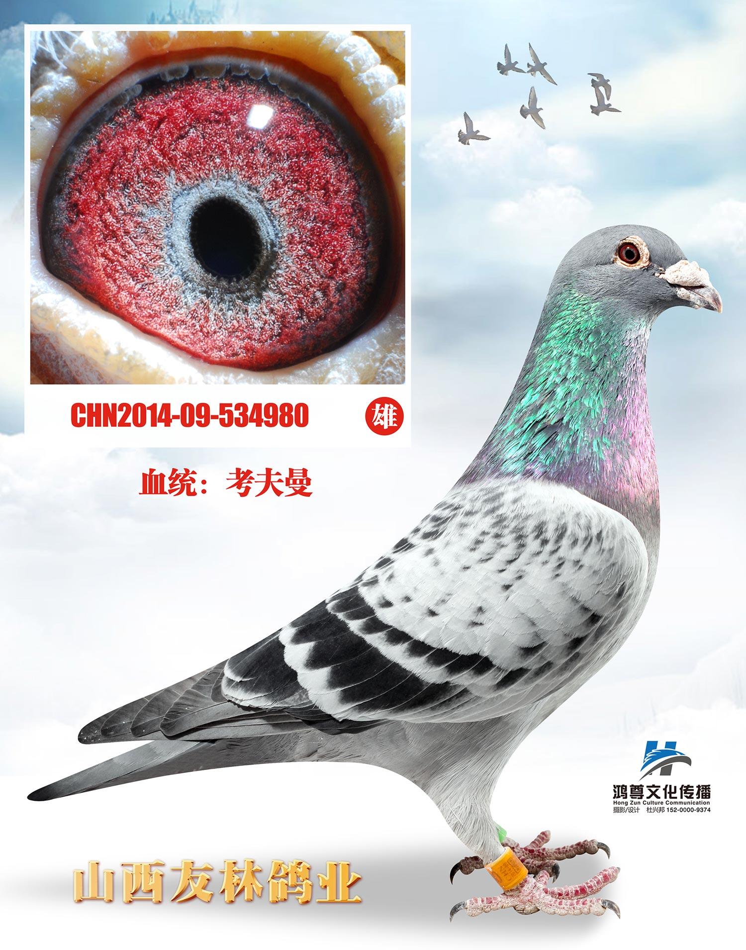"""考夫曼980""""上海市千公里9名"""""""