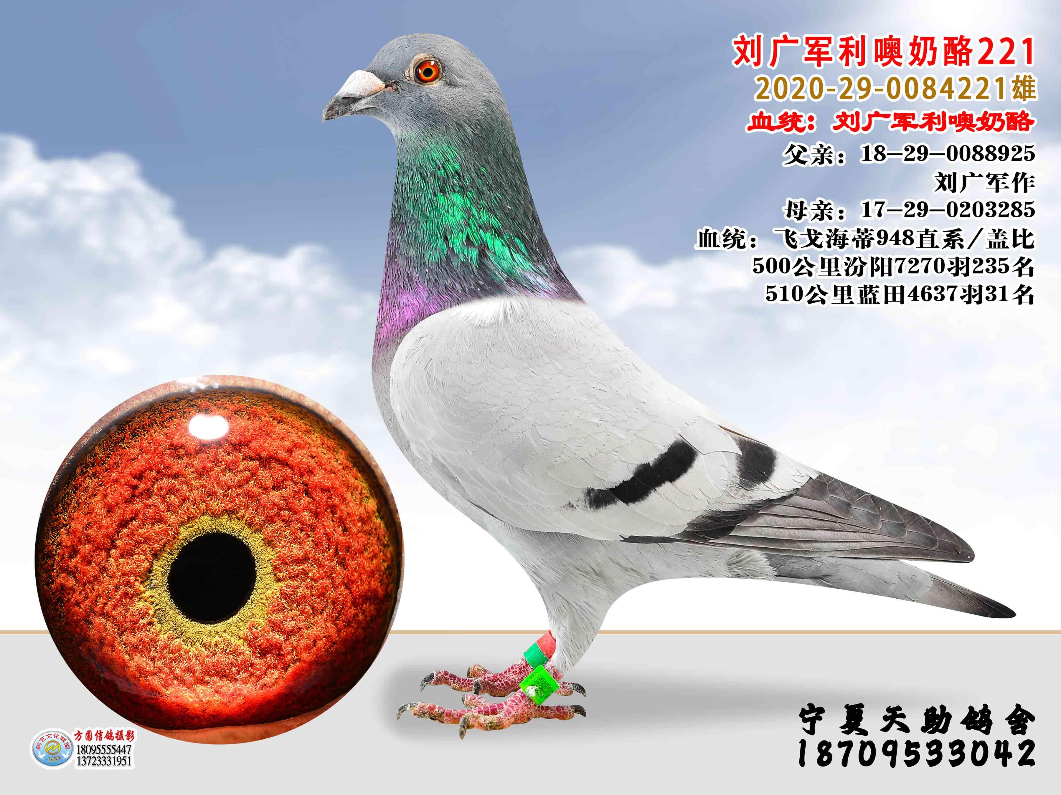 刘广军利噢奶酪221