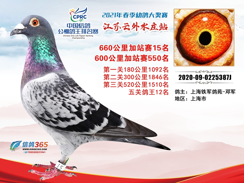 江苏云外水庄赛鸽中心660公里加赛15名