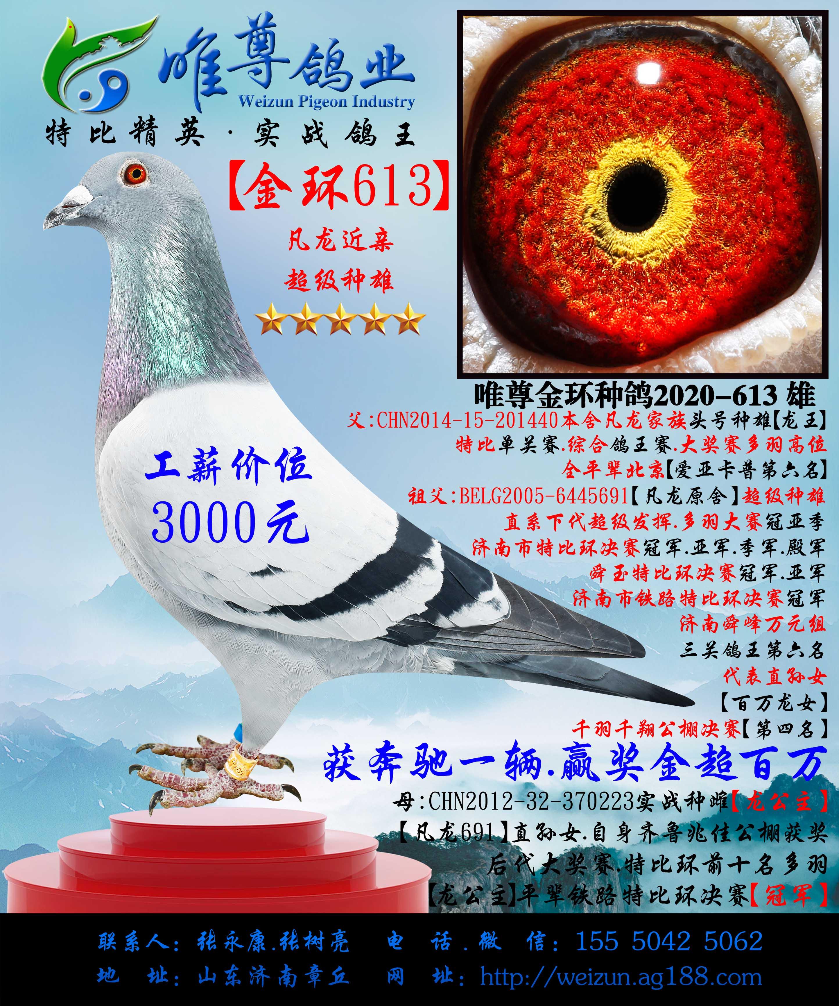 【金环613】凡龙近亲种雄