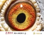 艺术814眼志