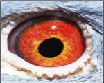 菲尔普斯眼睛展示