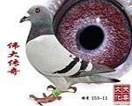 �ゴ�髌� 雄 特� 153-11