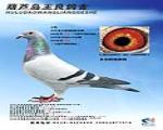 CHN2007-32-100000