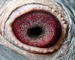 香奈尔5号的眼睛