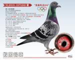 奥林匹克265(奥林匹克003直孙)
