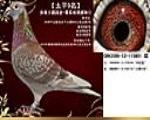 【太平9名】大鹏鸽舍