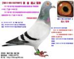 乔斯 托内 秦岭联赛 292
