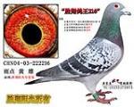 胜翔鸽王216