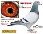 鸽王荣耀109