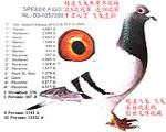 北京创世天博鸽苑