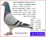 NL10-1031457