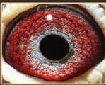 小艺术家眼睛
