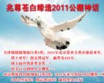 兆尊苍白缔造2011公棚神话