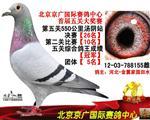 北京京广五关鸽王总冠军
