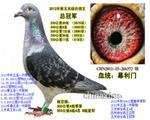 五关鸽王总冠军(已售天津)