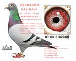 超�胡本293(非�u品)