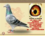 09年亚军(皇帝335女)