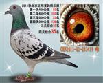 2011年正明俱乐部四关综合35位