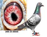 2009年广西北海赛鸽公棚冠军