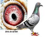 2010年广东江门益全鸽公棚冠军