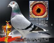2013年崇川450KM大奖赛亚军(出)