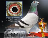 2013年崇川450KM大奖赛六名(出)