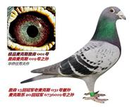 华侨赛鸽交流中心