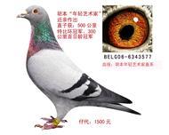 胡本577