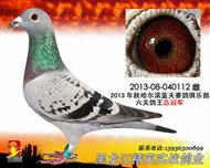 六关鸽王总冠军(已售)