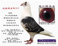 反基因亚军377已出售沈阳